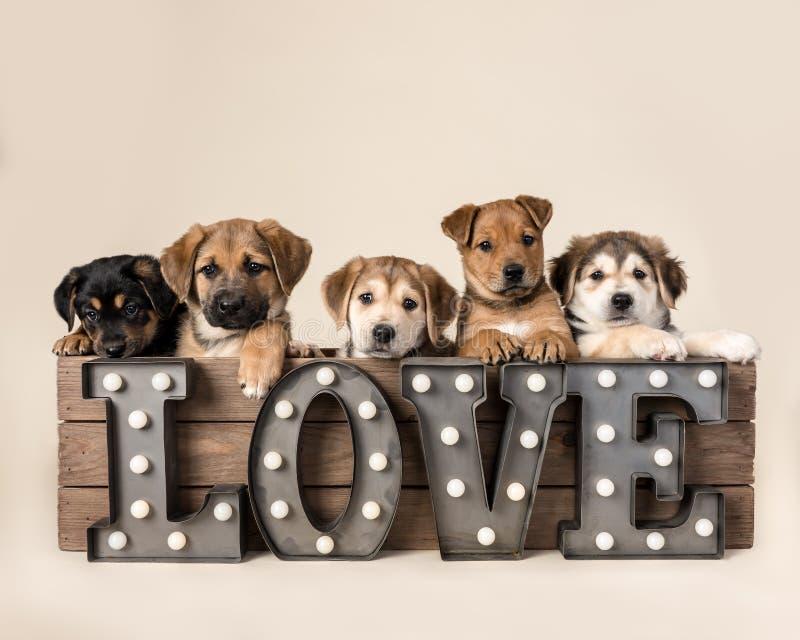 Perritos en caja con la muestra del amor imagen de archivo