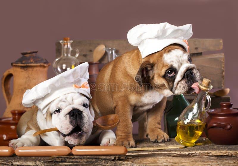 perritos en el sombrero del cocinero imagen de archivo