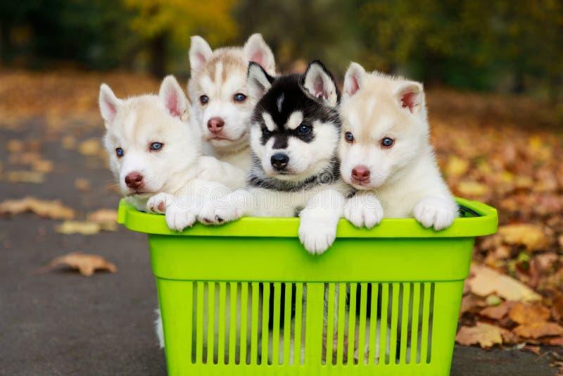 Perritos fornidos en la cesta que hace compras en un parque imagenes de archivo