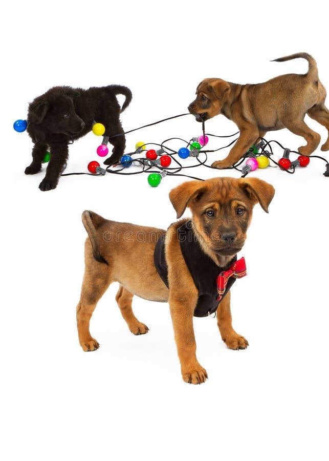 Perritos que juegan con los bulbos de la Navidad imagenes de archivo