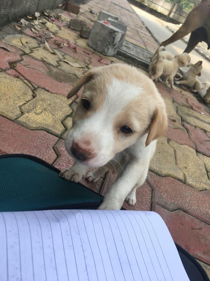 Perritos recién nacidos || fotos felices del perrito || perritos lindos imagen de archivo libre de regalías