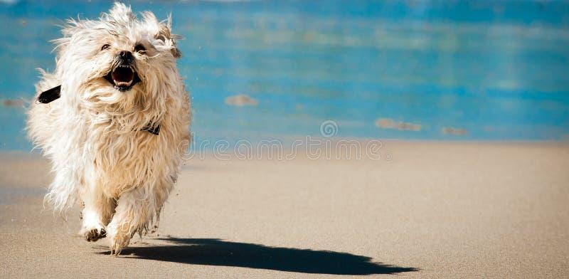 Perro épico divertido imagen de archivo