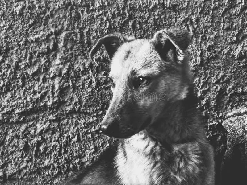 Perro, foto de archivo