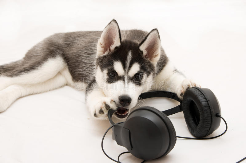 Perro imagen de archivo