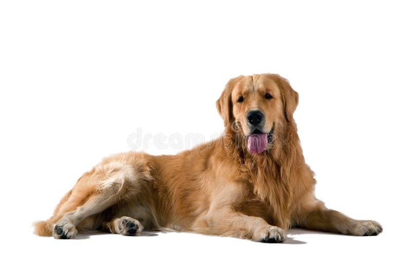Perro image libre de droits