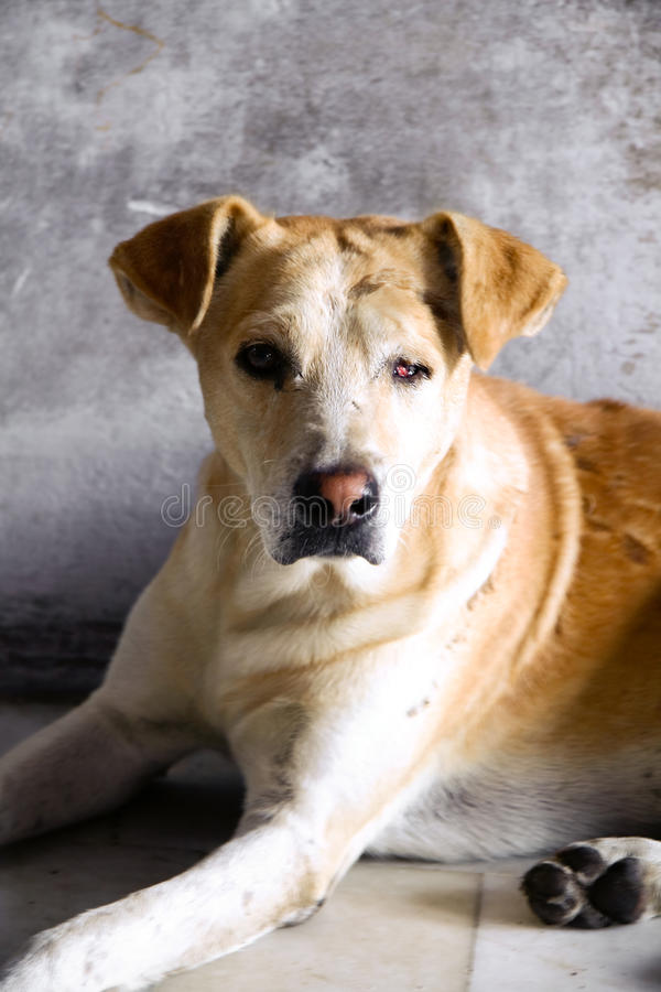 Perro abandonado fotos de archivo libres de regalías