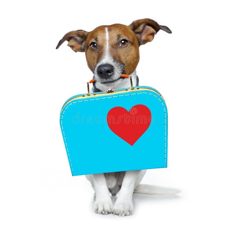 Perro abandonado y perdido imagen de archivo libre de regalías