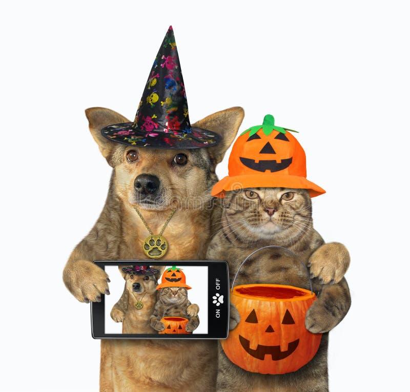 Perro abrazado con gato por Halloween 3 imágenes de archivo libres de regalías