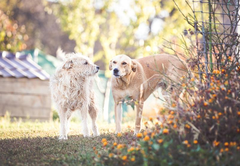 Perro adoptado raza mezclada feliz foto de archivo