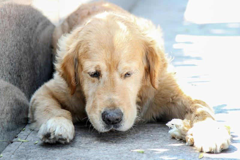Perro adorable parece desesperado y en la pobreza imágenes de archivo libres de regalías