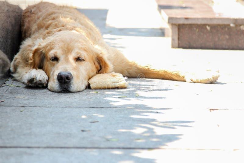 Perro adorable parece desesperado y en la pobreza imagenes de archivo