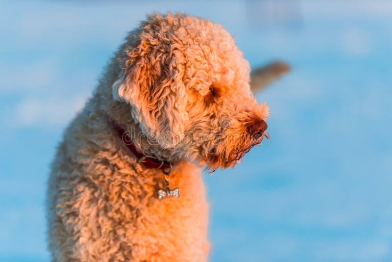 Perro agradable fotografía de archivo