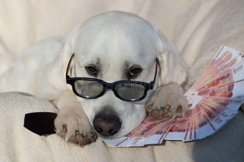 Perro agradable con el dinero foto de archivo libre de regalías