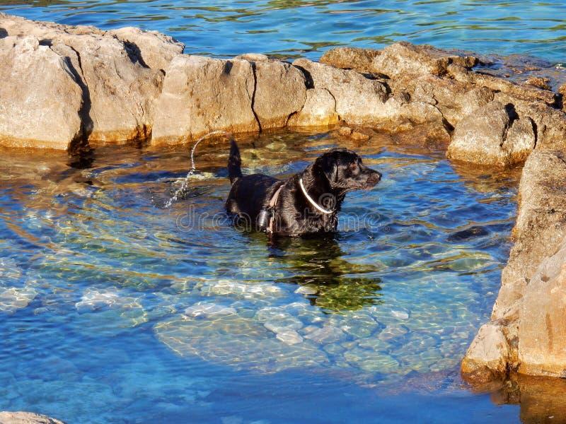Perro al mar foto de archivo libre de regalías