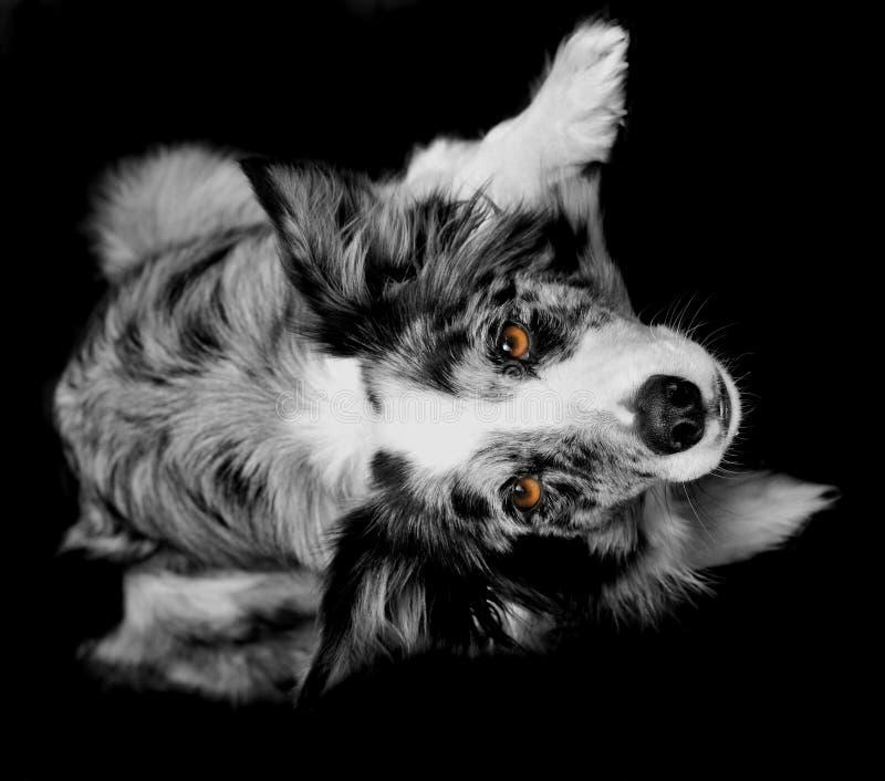 Perro alerta fotografía de archivo