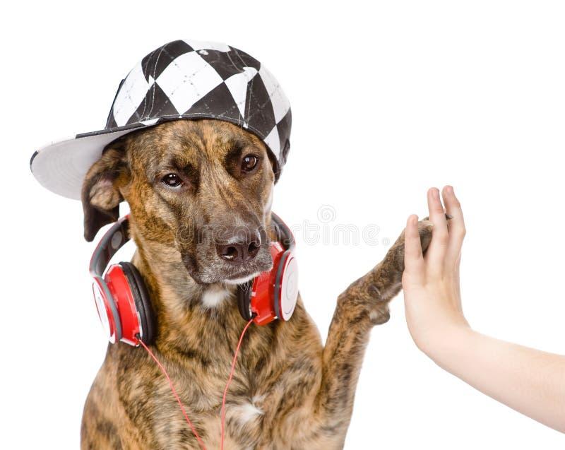 Perro altos cinco con la mano masculina Aislado en el fondo blanco fotos de archivo libres de regalías