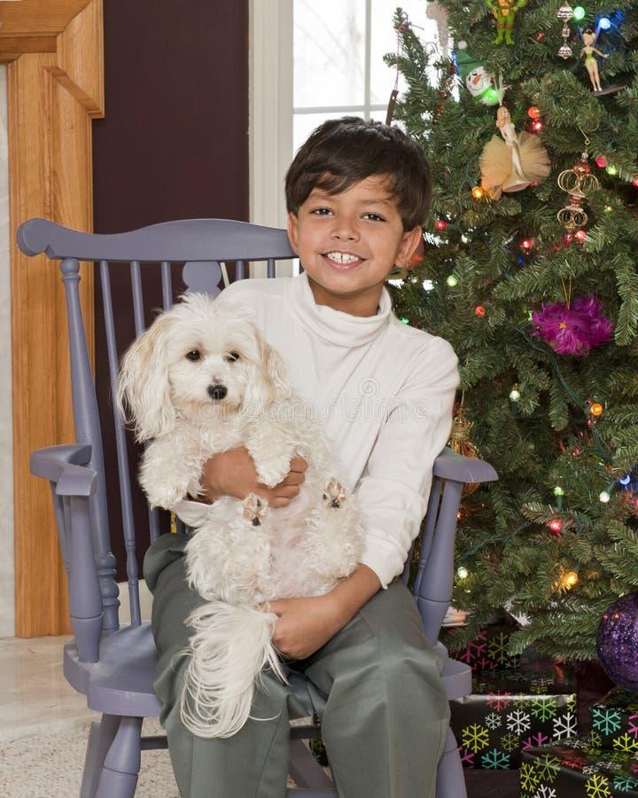 Perro-amante de la Navidad imagen de archivo libre de regalías