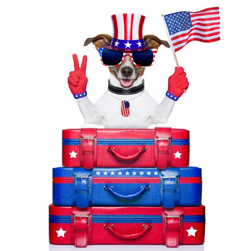 Perro americano fotografía de archivo libre de regalías