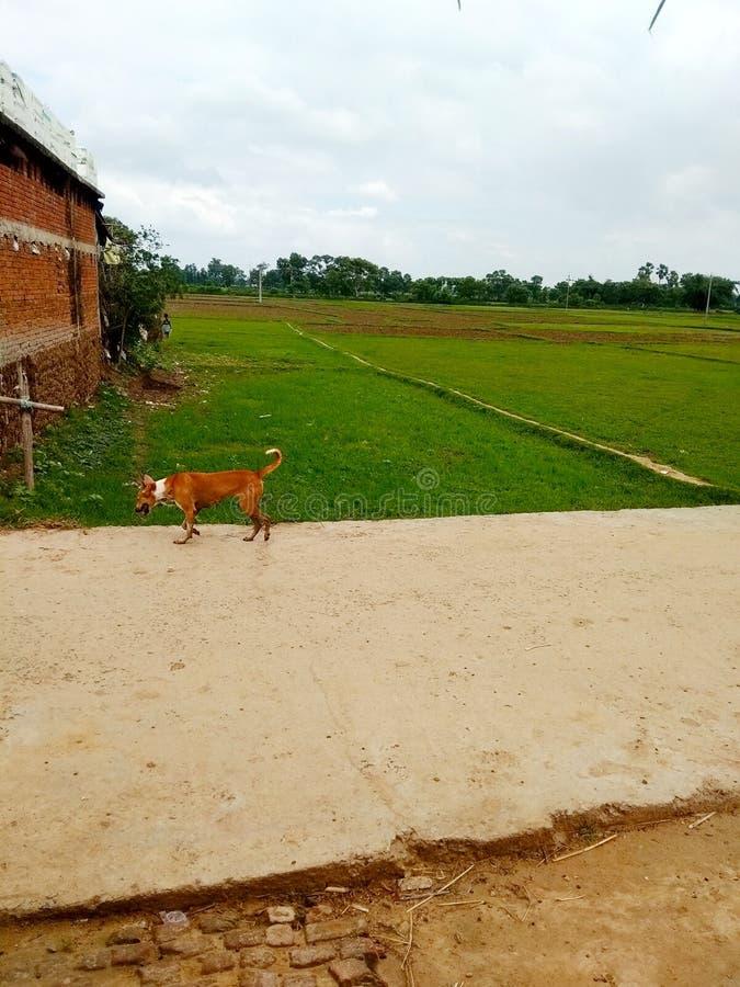Perro animal del mejor del pueblo camino natural indio de la tierra imagen de archivo