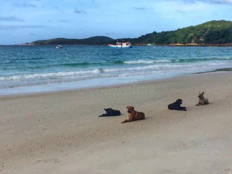Perro, animal, mar, cielo, lindo fotografía de archivo