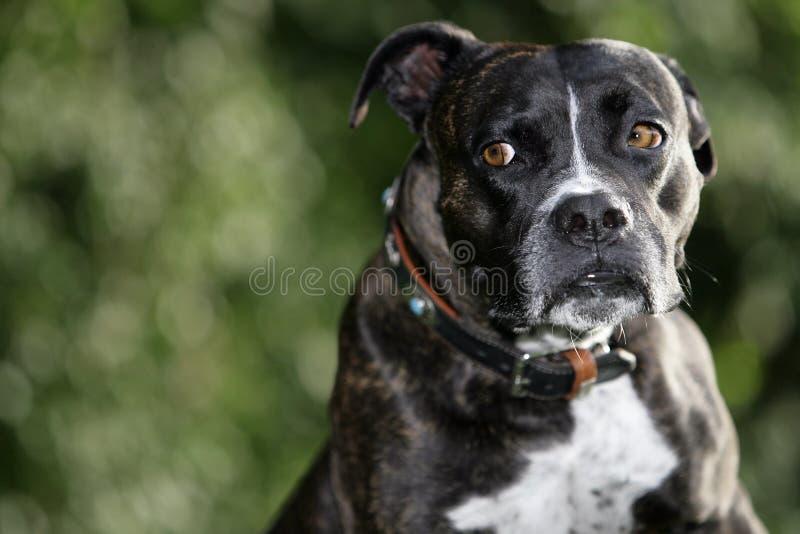 Perro asustado imagen de archivo libre de regalías