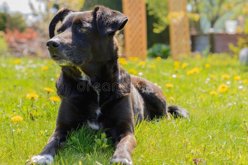 Perro atento en el sol fotografía de archivo