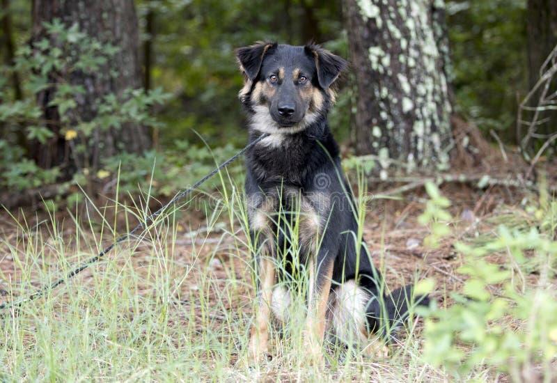 Perro australiano de la mezcla de Retriever del pastor que se sienta al aire libre en el correo fotografía de archivo