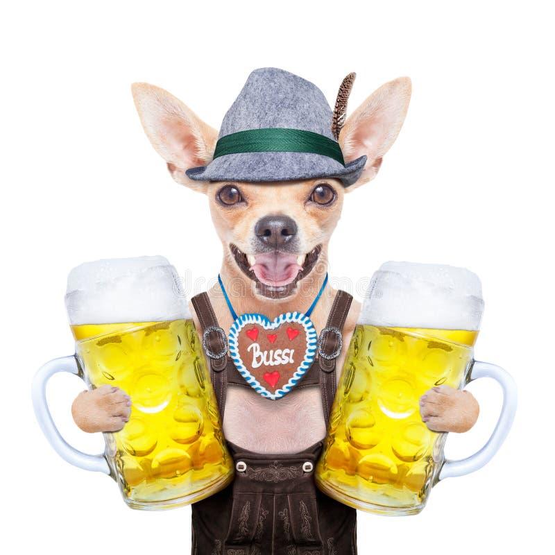 Perro bávaro de la cerveza imagen de archivo libre de regalías