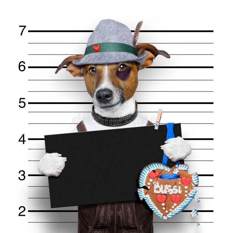 Perro bávaro del mugshot de la cerveza imagen de archivo libre de regalías
