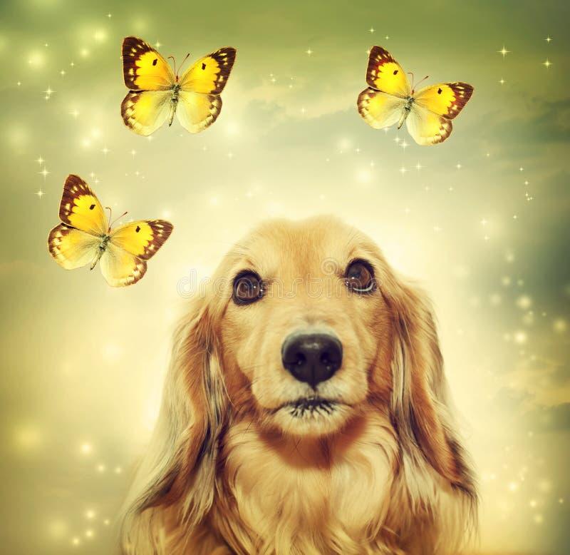 Perro basset con las mariposas libre illustration