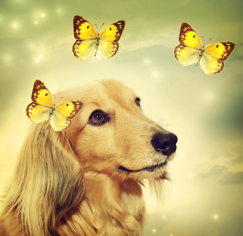Perro basset con las mariposas imágenes de archivo libres de regalías