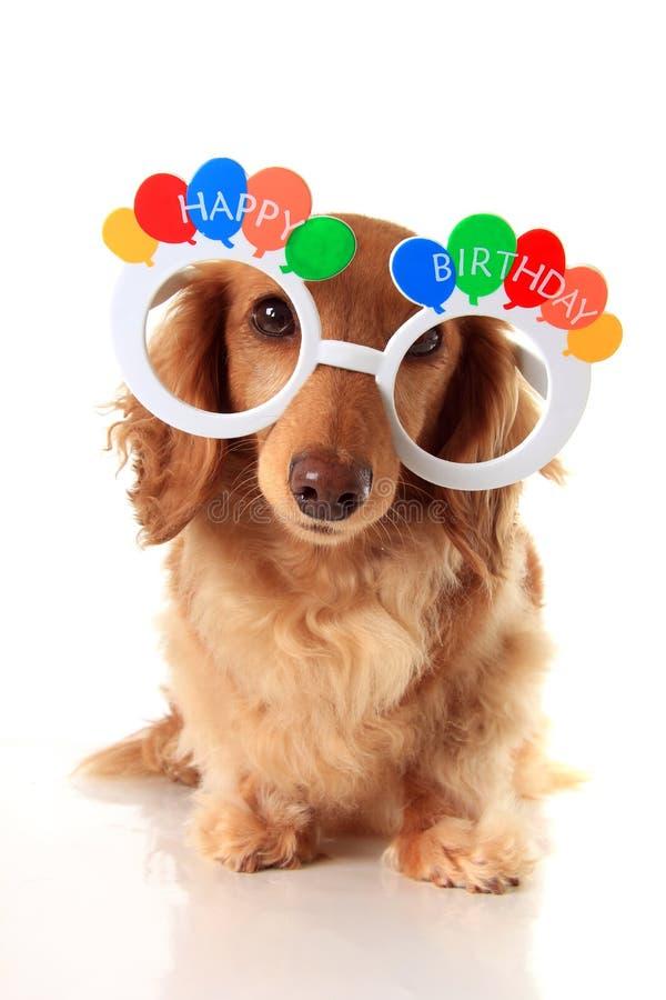 Perro basset del feliz cumpleaños foto de archivo libre de regalías