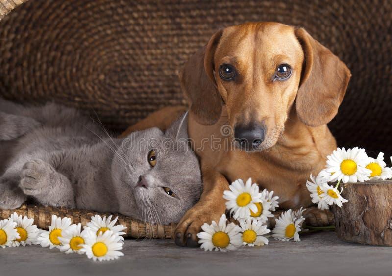 Perro basset del rojo del gato y del perrito imagen de archivo libre de regalías