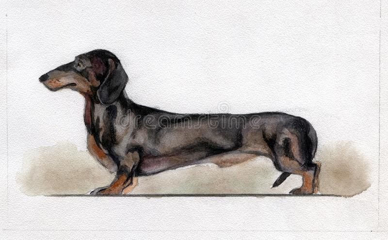 Perro basset negro estándar pintado en acuarela imágenes de archivo libres de regalías