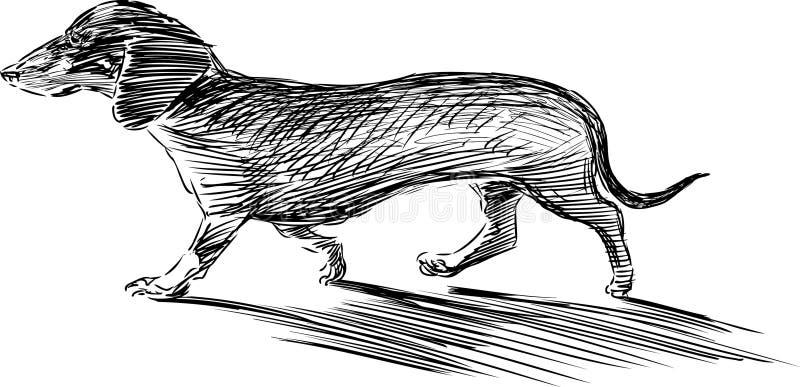Perro basset que camina libre illustration