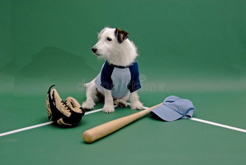 Perro blanco con el engranaje del béisbol imagenes de archivo