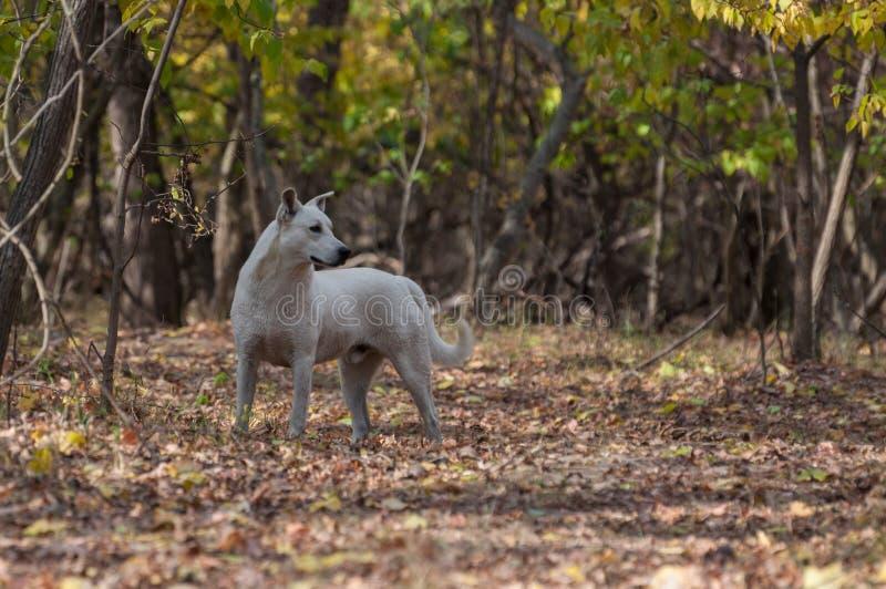 Perro blanco que mira a la derecha en el bosque foto de archivo