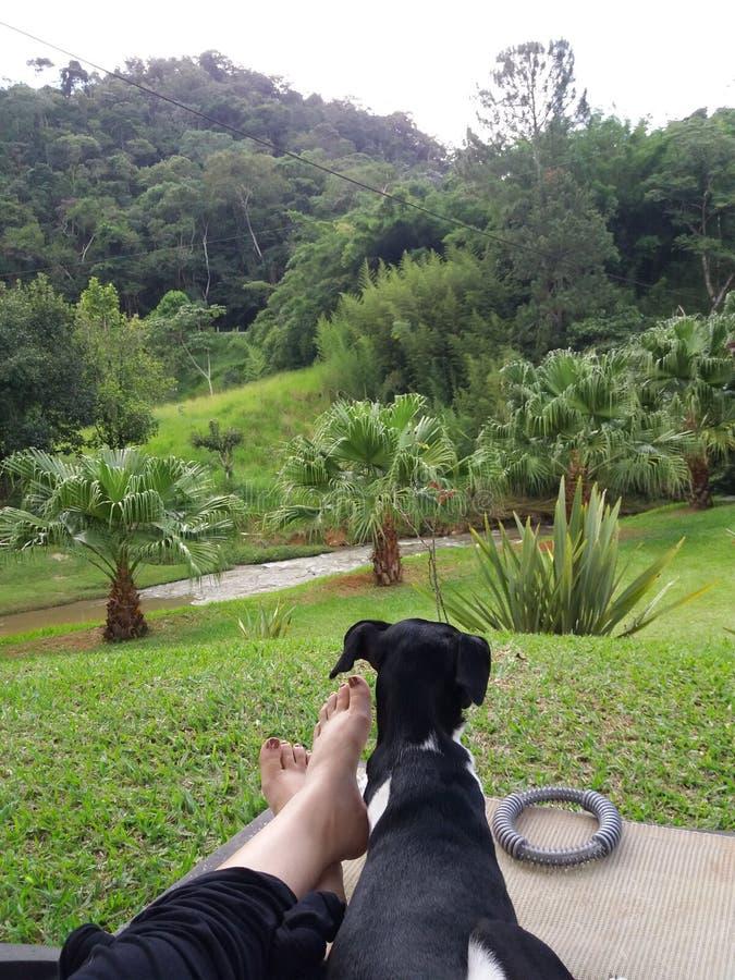 Perro blanco y negro brasileño de Terrier - mentira reservada en los pies del dueño admirando la naturaleza con las montañas herm fotografía de archivo libre de regalías