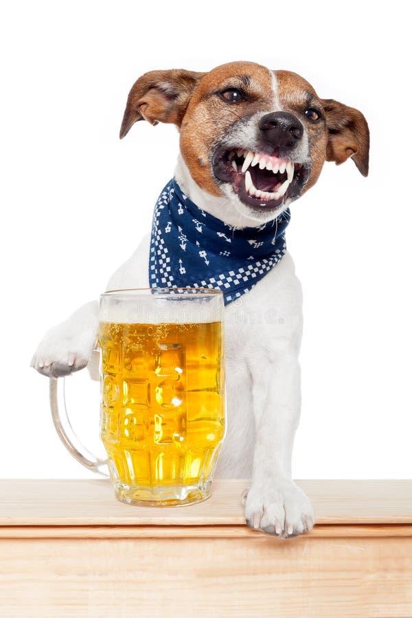 Perro borracho con la cerveza fotos de archivo