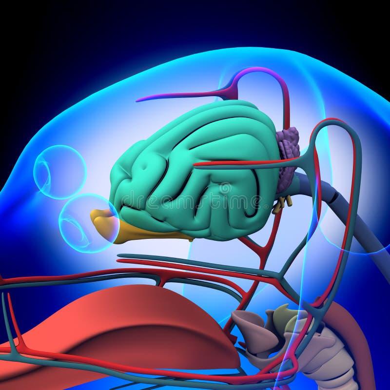 Perro Brain Anatomy - anatomía de un cerebro masculino del perro ilustración del vector