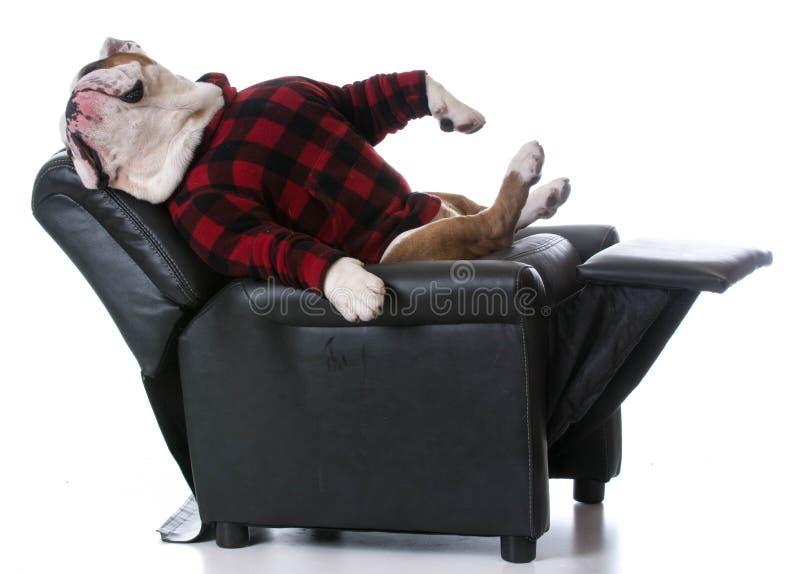 Perro cansado fotografía de archivo libre de regalías