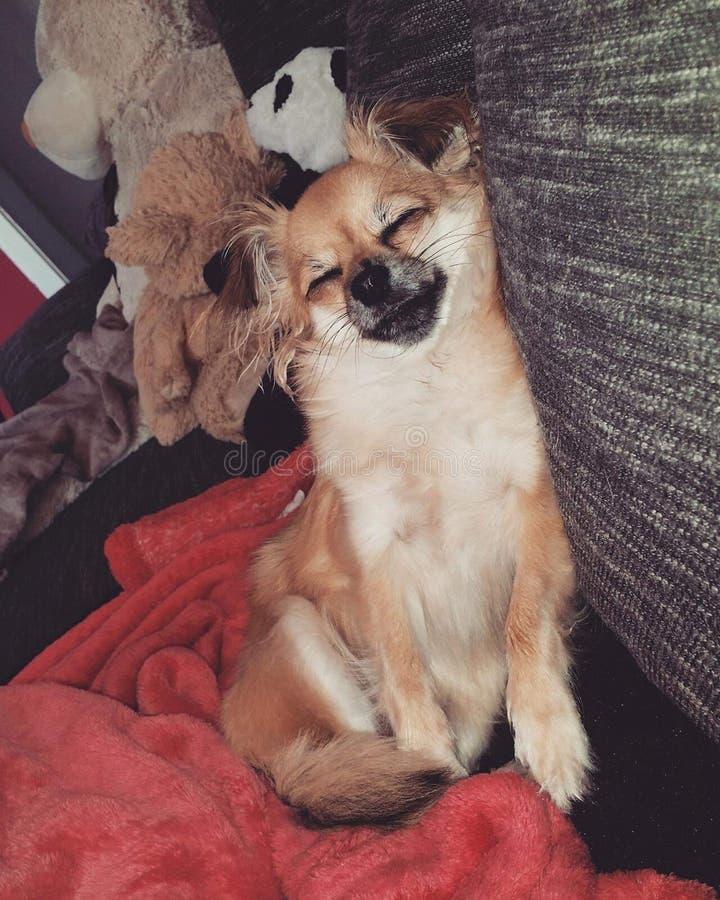 Perro cansado cada día fotos de archivo