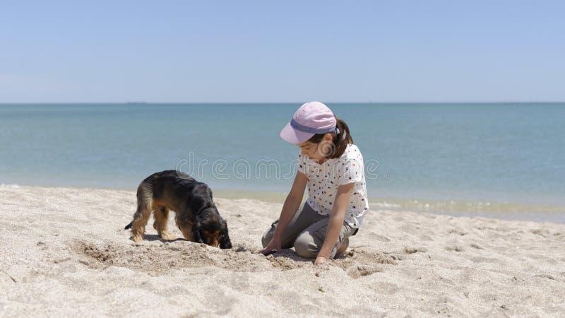 Perro casero de Girland que cava en la playa fotografía de archivo libre de regalías
