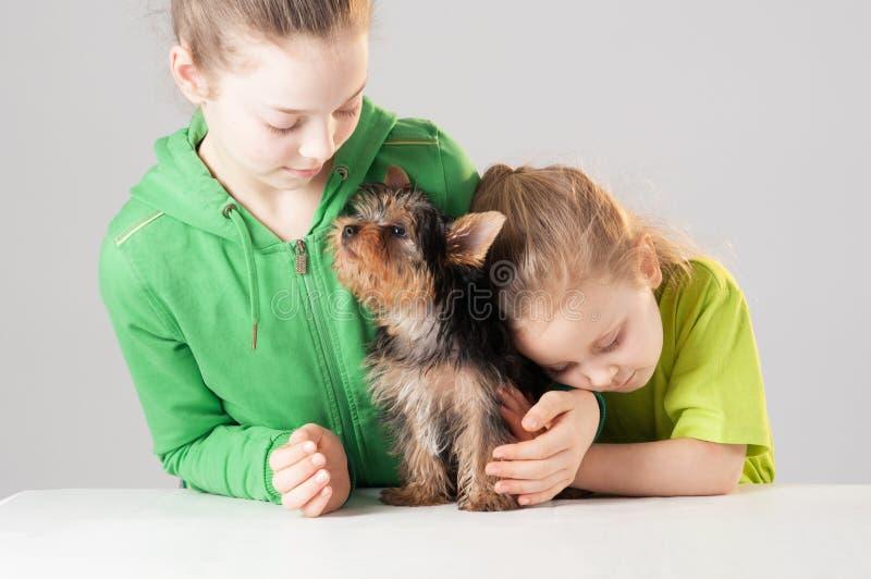 Perro casero de la familia con los niños fotografía de archivo