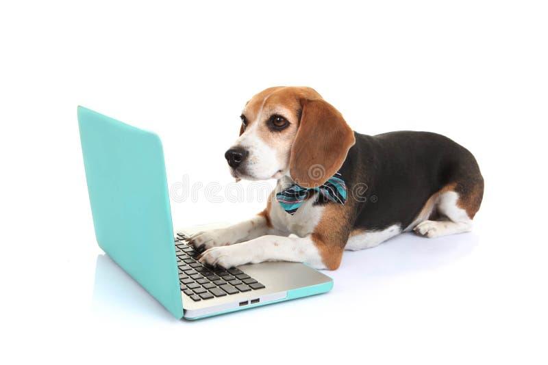 Perro casero del concepto del negocio usando el ordenador portátil imagenes de archivo