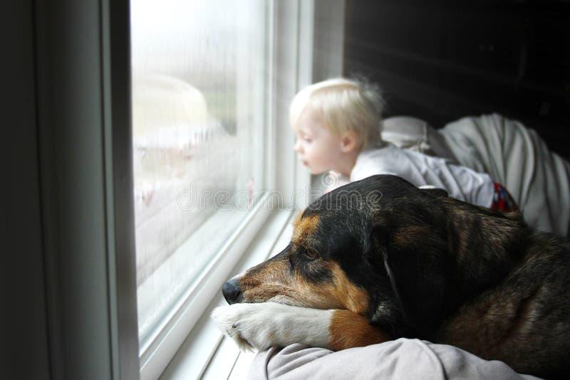 Perro casero y pequeño bebé que miran soñador hacia fuera la ventana en un día lluvioso imagen de archivo libre de regalías