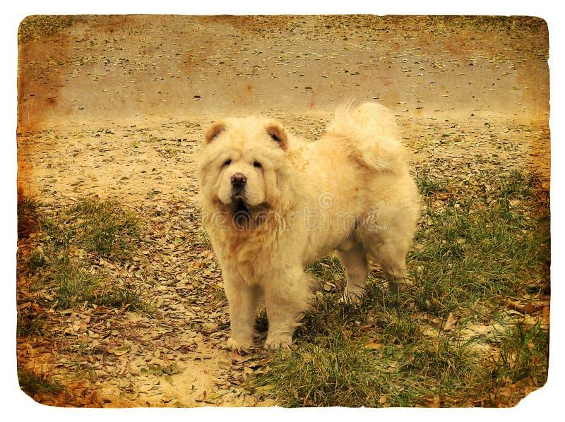 Perro chino de perro chino de la casta del perro. Postal vieja libre illustration