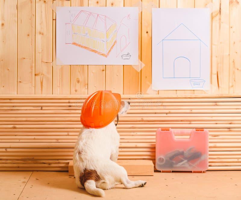 Perro como constructor divertido con el casco de protección que mira el modelo de la perrera fotografía de archivo