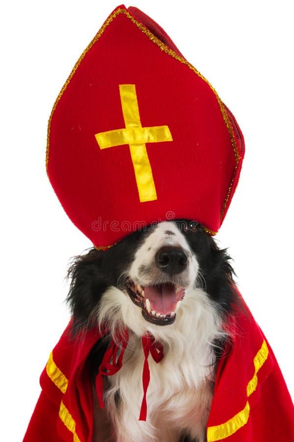 Perro como Sinterklaas holandés imagen de archivo libre de regalías