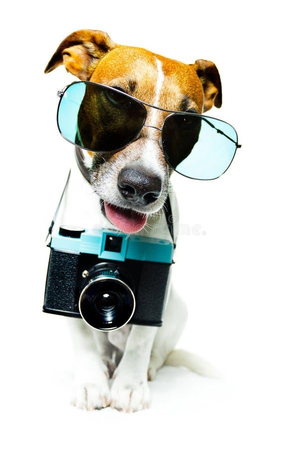 Perro con cortinas y una cámara de la foto imagenes de archivo